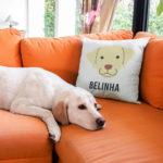 capa-de-almofada-personalizada-com-raca-e-o-nome-do-seu-dog-almofada-personalizada-330